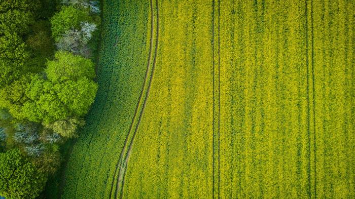 机器人技术是农业的未来吗? 收获